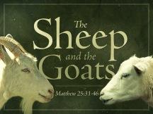 Image result for judgement sheep or goat